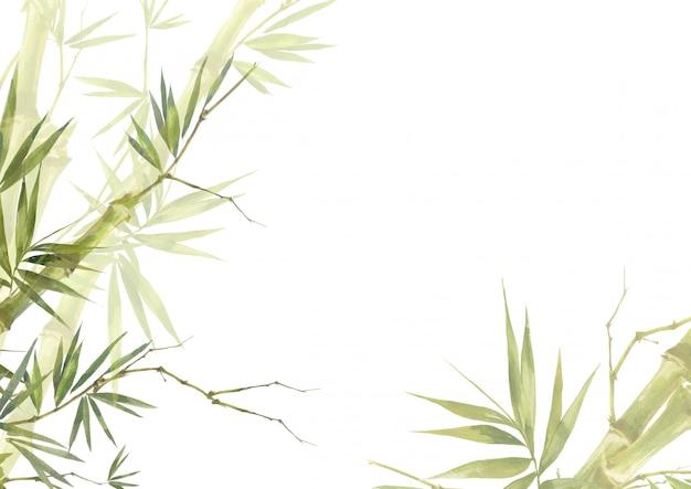 La pittura dell'illustrazione dell'acquerello del bambù lascia il fondo Foto Premium