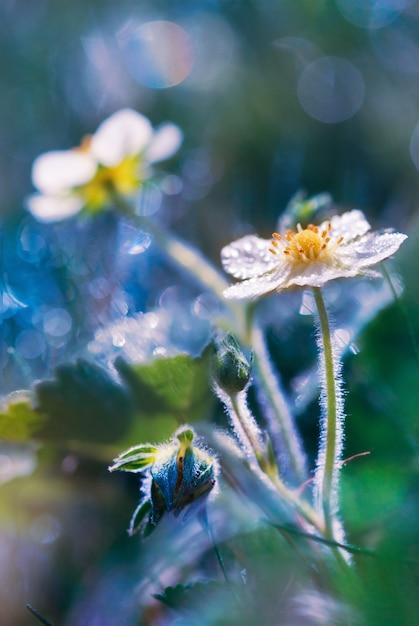 La primavera fiorisce in rugiada nelle prime ore del mattino Foto Premium