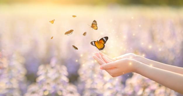 La ragazza libera la farfalla dal barattolo, momento blu dorato concetto di libertà Foto Premium