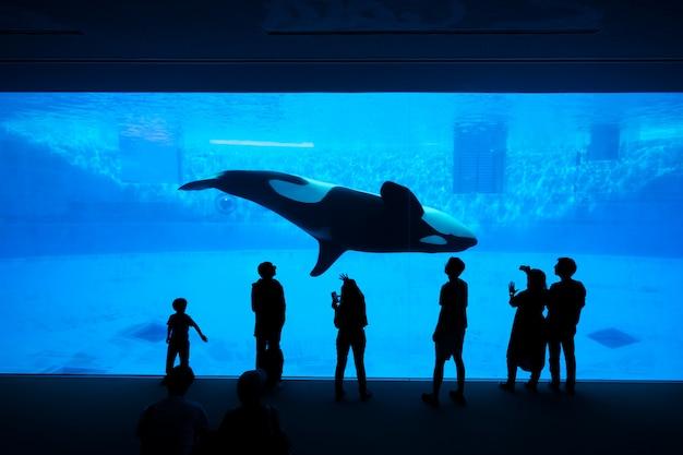 La silhouette di turisti che guardano un'orca o una balena killer nell'acquario. Foto Premium