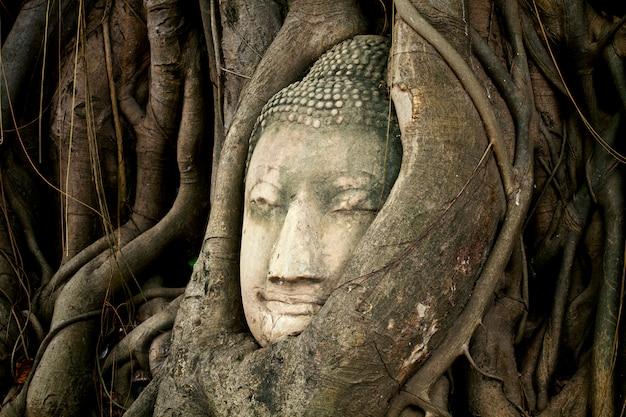 La vecchia testa di buddha dell'arenaria nelle radici dell'albero a wat mahathat, ayutthaya, tailandia Foto Premium