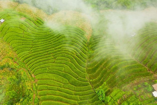 La vista aerea delle risaie a terrazze verdi abbellisce il modello differente alla mattina in tailandia del nord Foto Premium