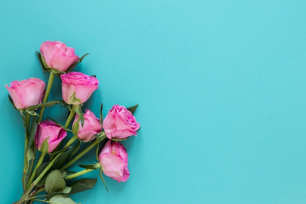 La vista superiore ha isolato i fiori delle rose sul fondo blu dello spazio della copia Foto Gratuite