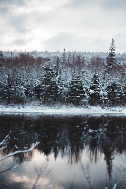 Lago nella foresta con neve Foto Gratuite