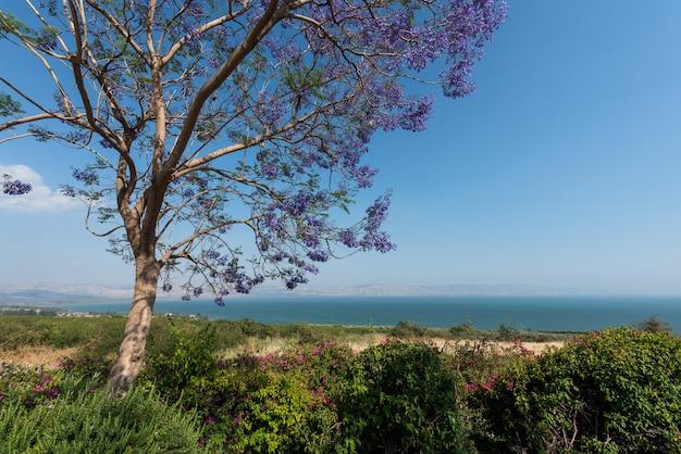 Lago tiberiade Foto Premium