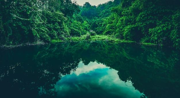 Lago tropicale foresta d'acqua Foto Premium