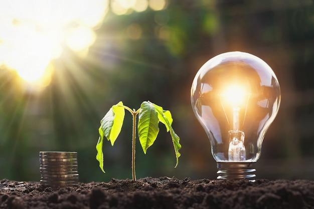 Lampadina con stack di giovani piante e monete sul terreno. concetto di risparmio di energia e denaro Foto Premium