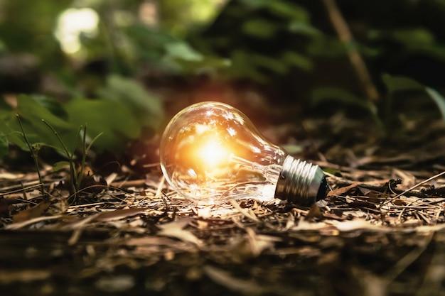 Lampadina su terra con il sole nella foresta. concetto di energia pulita Foto Premium