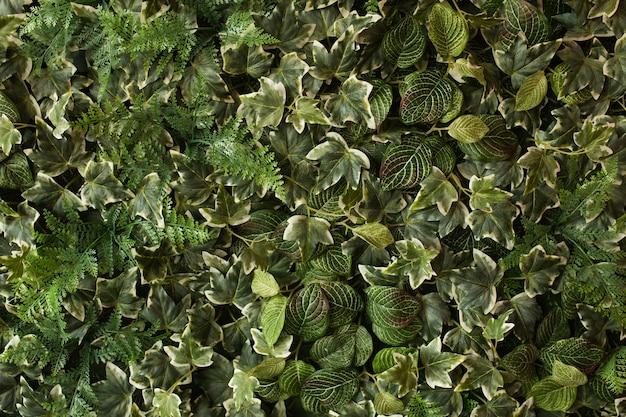 Layout creativo di foglie verdi tropicali. concetto di primavera della natura. distesi. Foto Gratuite
