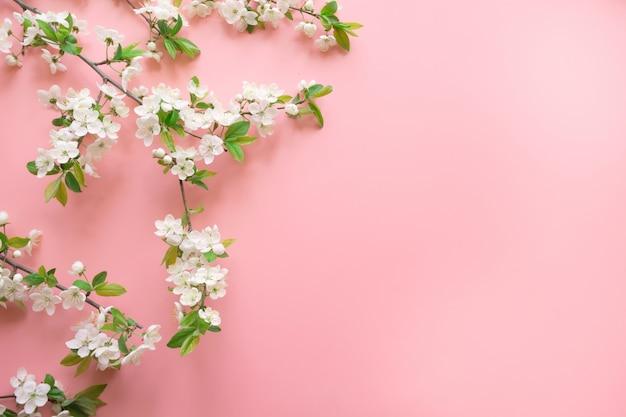 Layout di primavera creativa, rami di fiori bianchi di primavera su rosa pastello. floreale. vista dall'alto, distesi. sfondo di copyspace Foto Premium