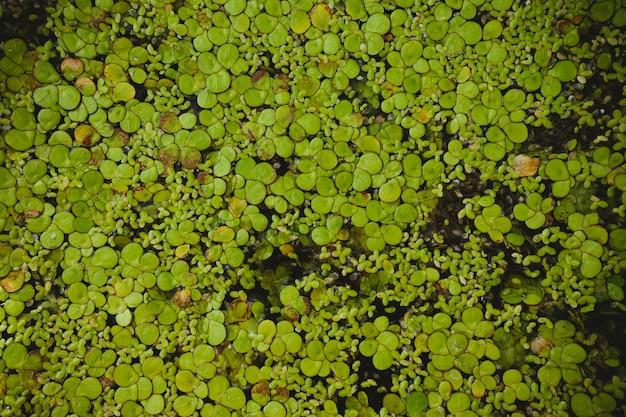 Le alghe sono la pianta più piccola del mondo Foto Premium