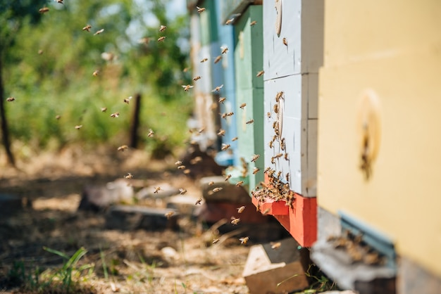 Le api volano Foto Premium