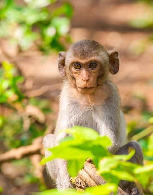 Le attivit delle piccole scimmie in una giornata di sole for Scimmie piccole domestiche