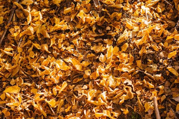 Le foglie di autunno cadute gialle si trovano sulla terra Foto Premium