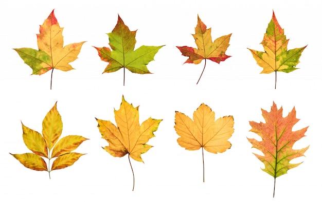 Le foglie di autunno variopinte hanno messo isolato su fondo bianco Foto Premium