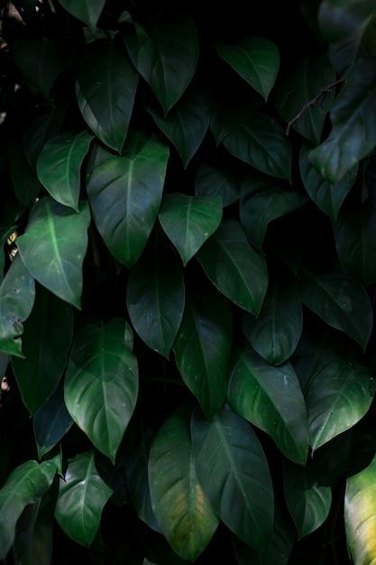 Le foglie verdi Foto Premium