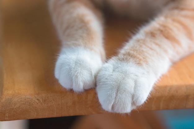 Le gambe del gatto sembrano carine. Foto Premium