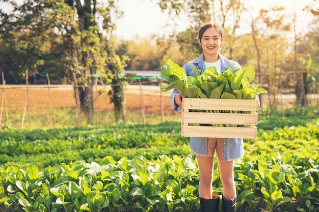 Le giovani donne dei giardinieri organici raccolgono le verdure in cassette di legno da consegnare ai clienti al mattino. Foto Premium
