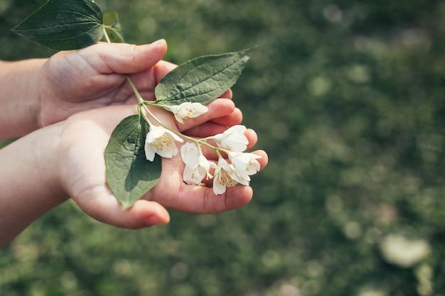 Le mani del bambino tengono il fiore bianco Foto Premium