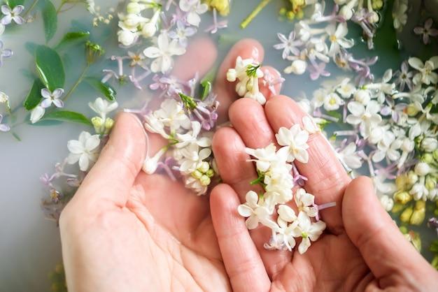 Le mani tengono fiori lilla di diversi colori in acqua con latte. Foto Premium
