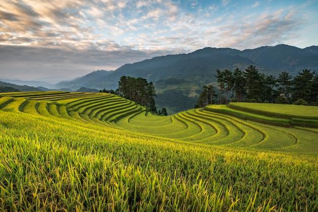 Le montagne della terrazza del riso a mu possono chai, vietnam Foto Premium