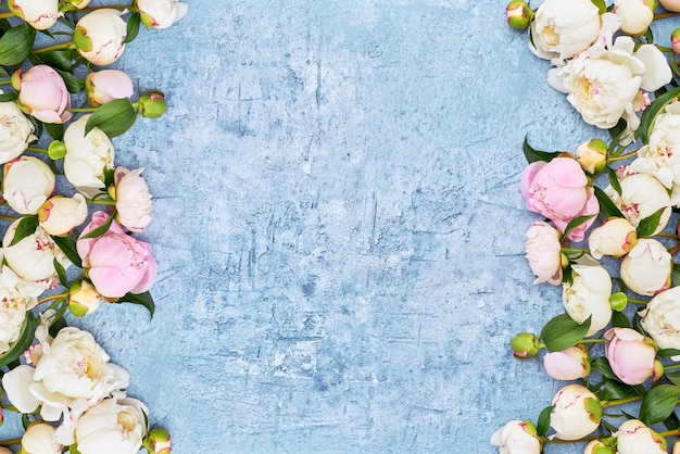 Le peonie bianche rasentano il fondo blu della struttura Foto Premium
