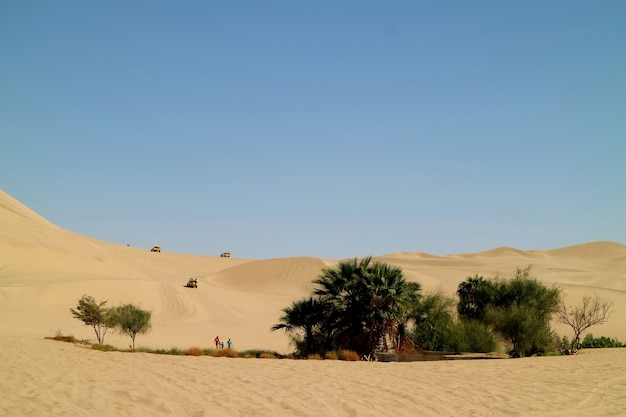 Le persone godono le attività intorno alla piccola oasi sulle immense dune di sabbia del deserto di huacachina, nella regione di ica, in perù Foto Premium