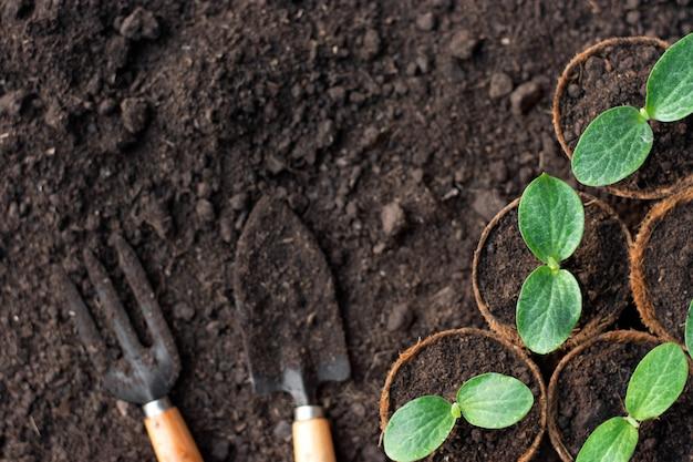 Le piantine di zucca sono coltivate in vasi di fibra di cocco. Foto Premium