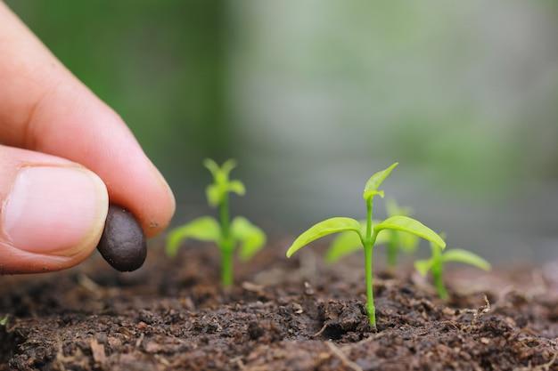 Le piantine vengono coltivate da terra e piantano un seme nell'agricoltura del suolo Foto Premium