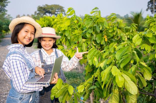 Le ragazze hanno consultato e pianificato la piantagione di sentol giallo e l'utilizzo di un computer portatile nel campo di riso. l'agricoltore è una professione che richiede pazienza e diligenza. essere un contadino Foto Premium