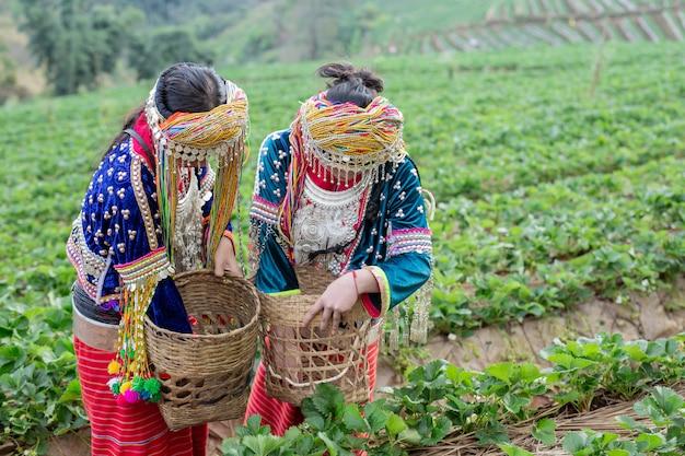 Le ragazze tribali stanno raccogliendo fragole Foto Gratuite