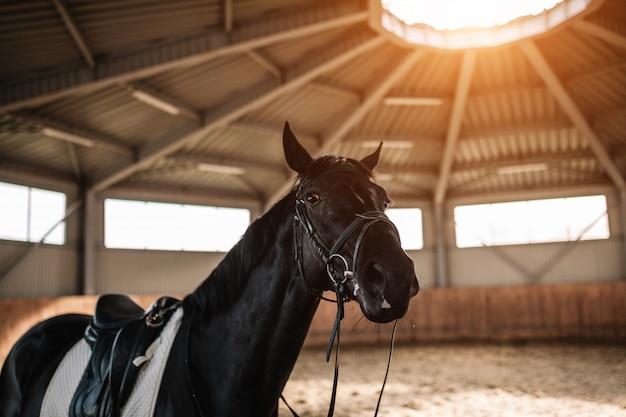 Le selle del cavallo si chiudono su con luce solare Foto Premium