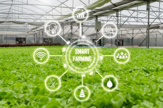 Le verdure fresche verdi idroponiche organiche dell'interno della lattuga producono nell'azienda agricola della scuola materna del giardino della serra con l'icona visiva, l'attività agricola, l'agricoltura astuta, la tecnologia digitale e il concetto sano dell'alimento Foto Premium