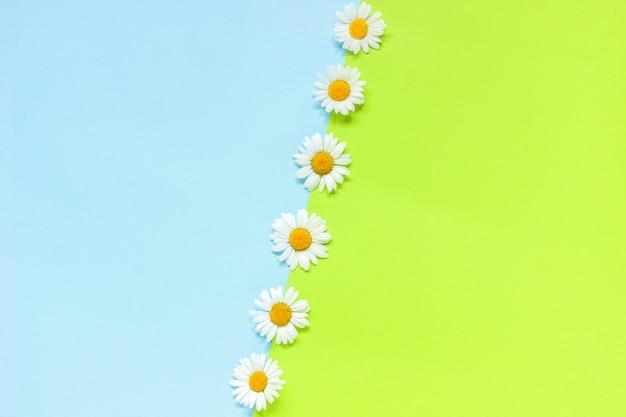 Linea chamomiles fiori margherite su sfondo di carta di colore verde e blu in stile minimal copia spazio modello per lettering, testo o il tuo design piatto creativo posare vista dall'alto Foto Premium