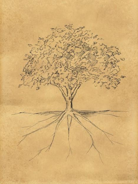 Lo schizzo dell'albero lascia e radice sulla carta Foto Gratuite