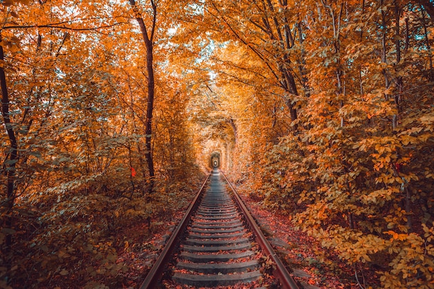 Love tunnel in autunno Foto Premium