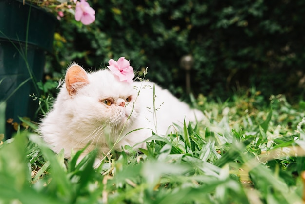 Lovely white cat nella natura Foto Gratuite