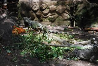 Lucertole allo zoo di surabaya Foto Gratuite