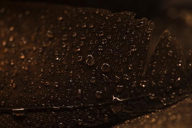 Macro della superficie marrone piuma con gocce d'acqua trasparente Foto Gratuite