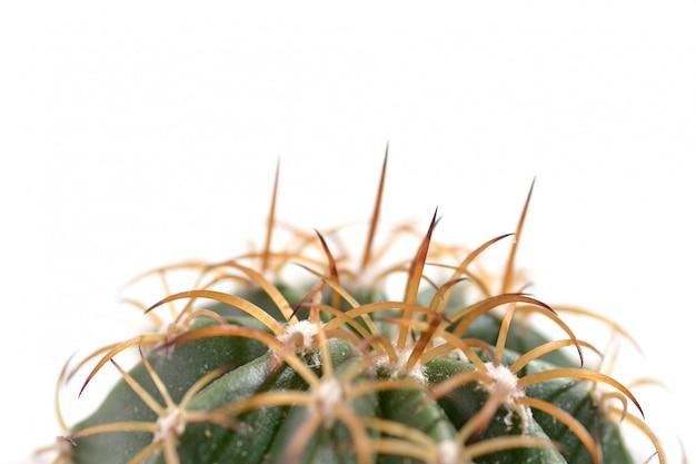 Macro di cactaceae Foto Premium