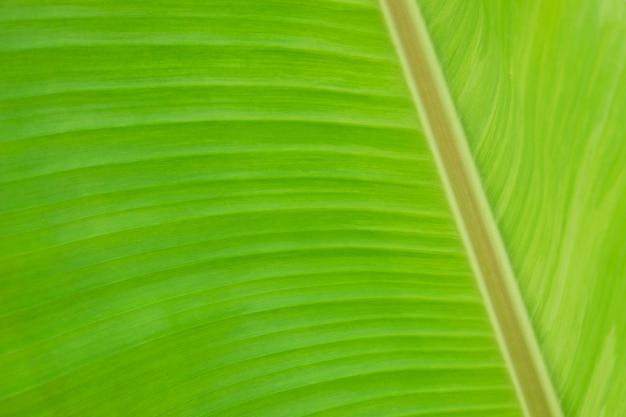 Macro fondo di struttura del fogliame della banana Foto Premium