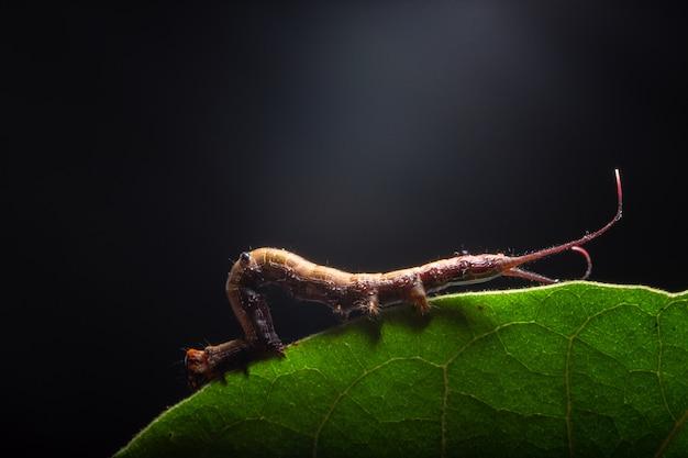 Macro verme sulla pianta. Foto Premium