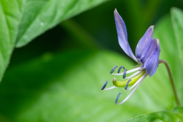 Macro wildflower del fondo Foto Premium