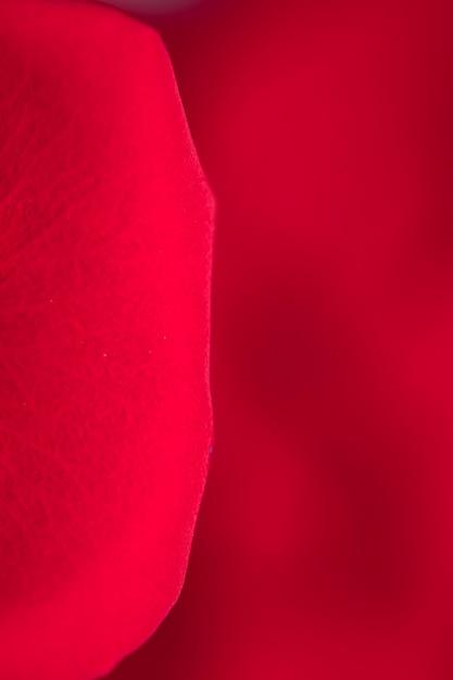 Macrofotografia dei petali di rosa rossa Foto Gratuite