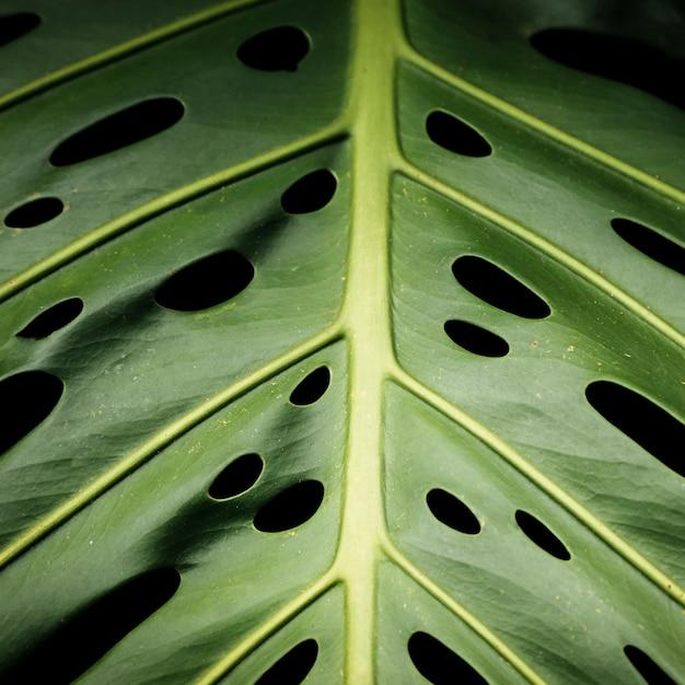 Macrofotografia della foglia tropicale verde Foto Gratuite