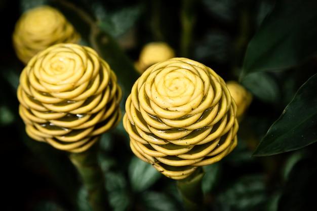 Macrofotografia gialla della pianta tropicale Foto Gratuite