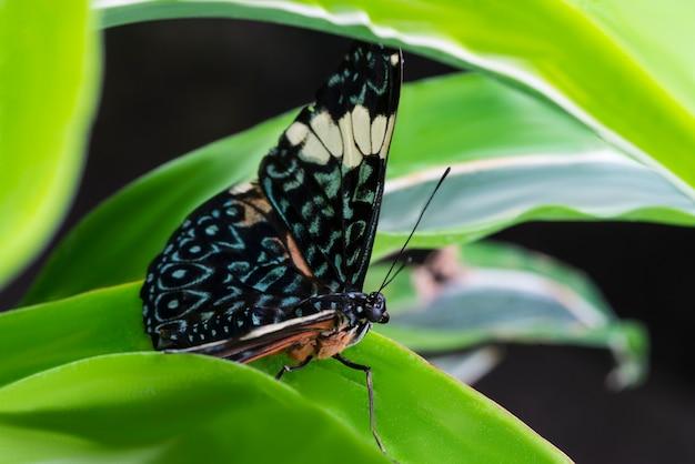 Maestosa farfalla colorata in habitat naturale Foto Gratuite