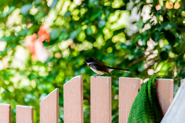Magpie standing calm on wooden fence Foto Premium