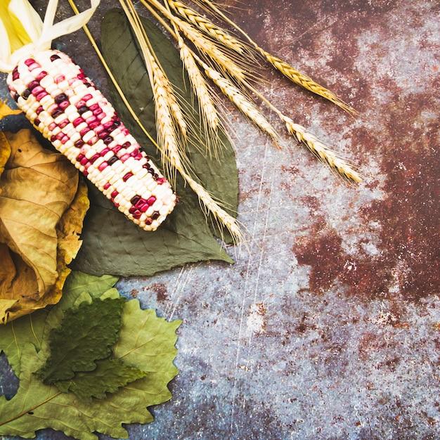 Mais sdraiato sulle foglie Foto Gratuite