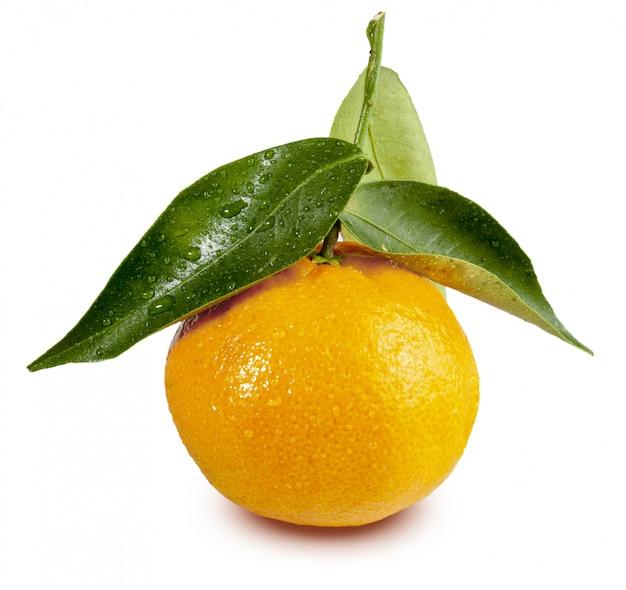 Mandarino fresco con foglie e gocce d'acqua. isolato (clementinas, clemenvillas, satsuma, octubrina) Foto Premium